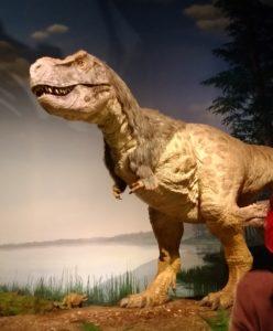 通常展示ティラノサウルス
