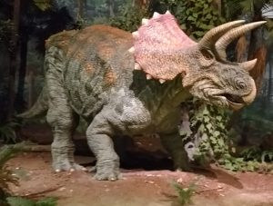 通常展示トリケラトプス
